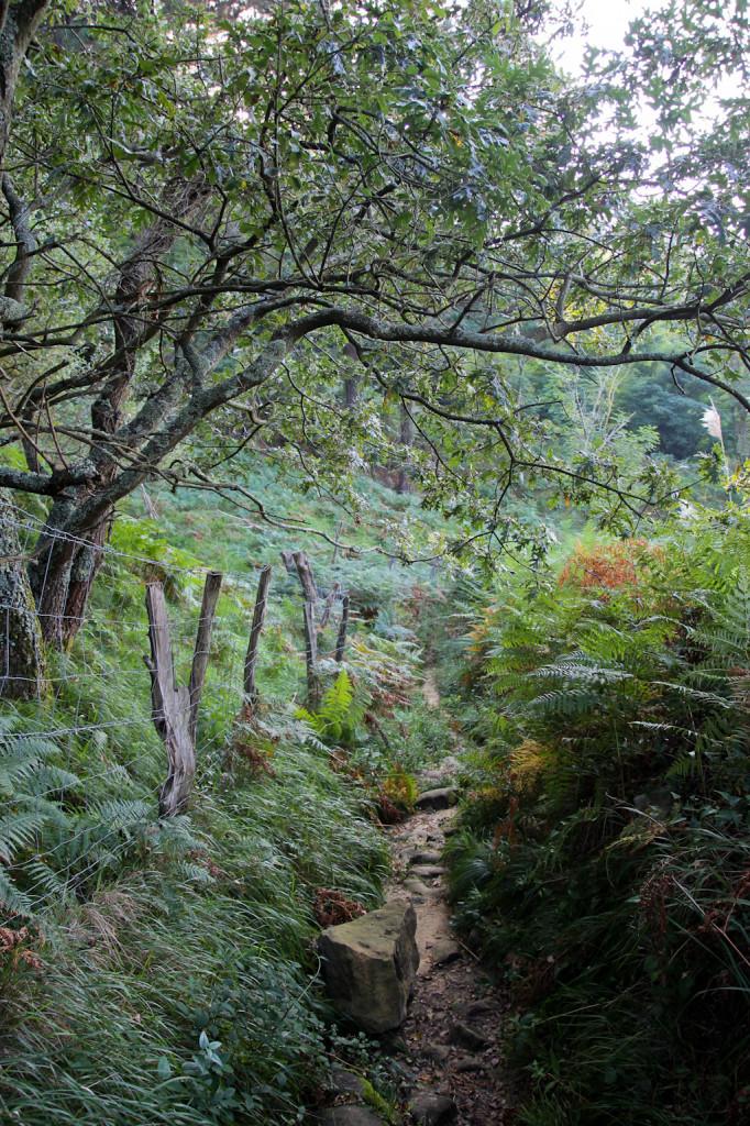 El sendero se ve amenudo invadido por los helechos.