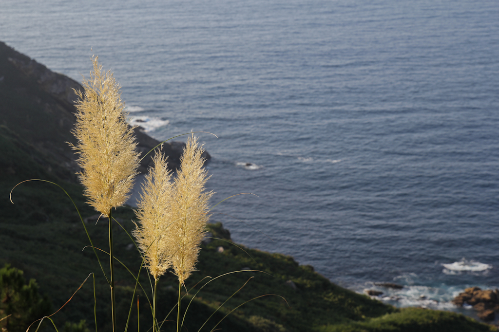 En la zona abunda la especie invasora de Plumeros de la Pampa.