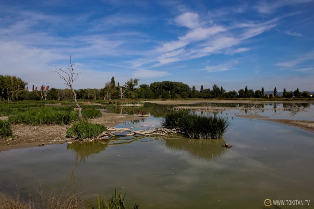 Los humedales del parque de Salburua son un lugar privilegiado para el birding.