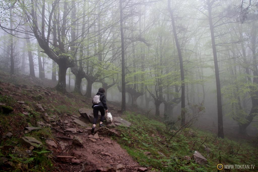 Niebla en el bosque
