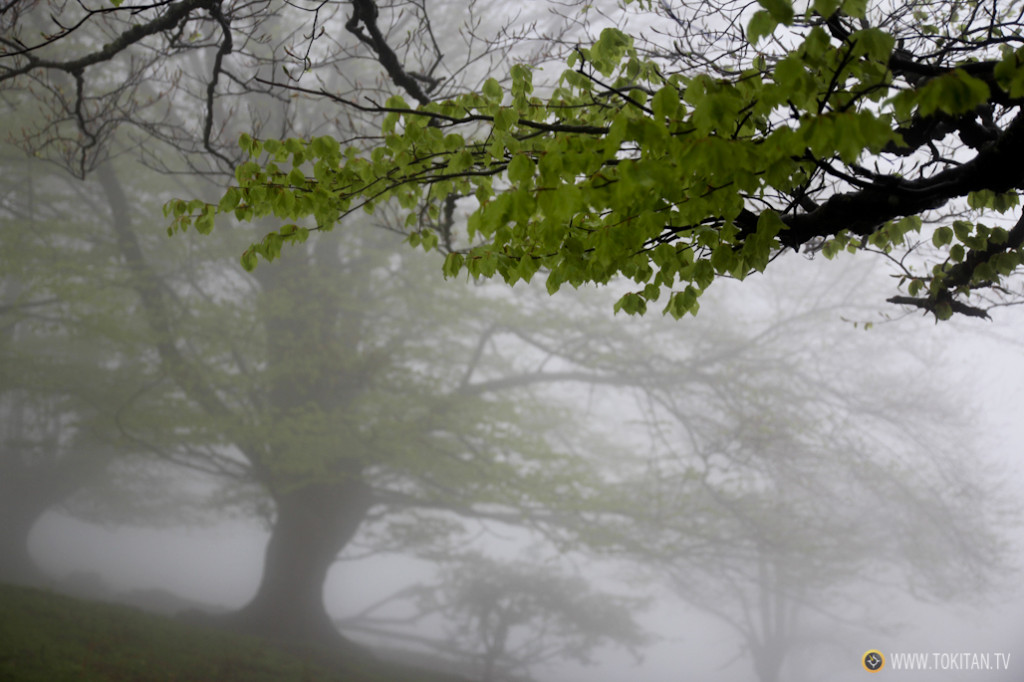 Hayas y niebla
