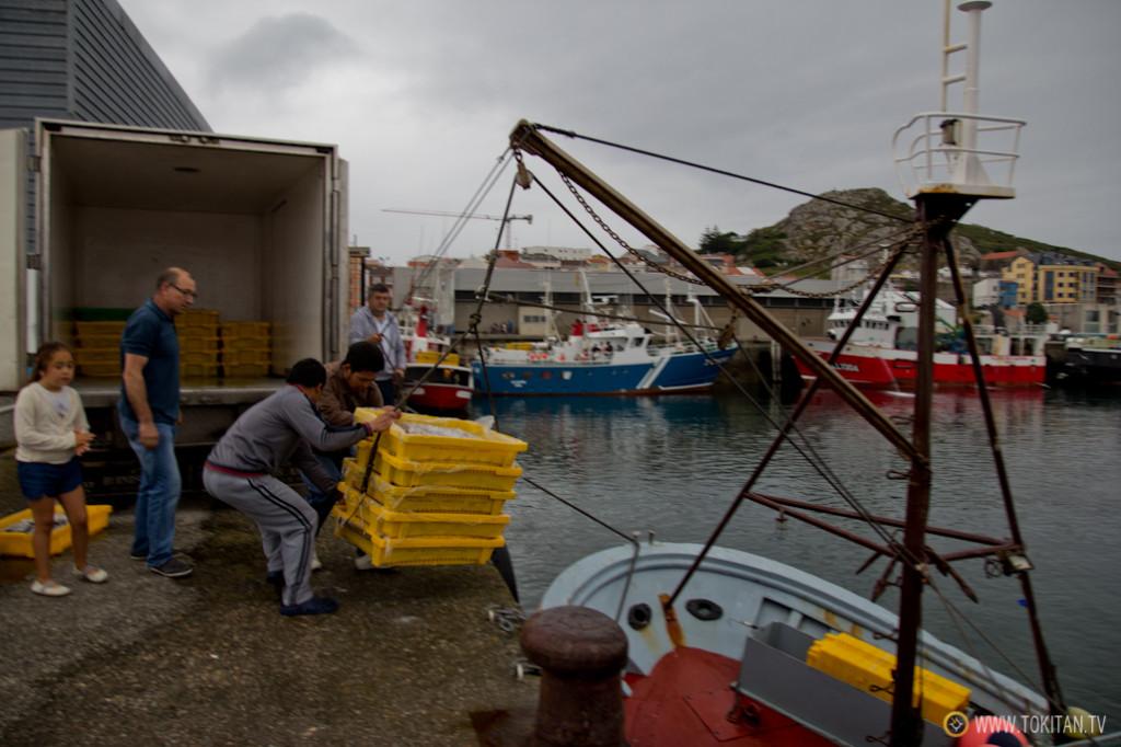 Los pescadores descargan el pescado en el puerto de Muxía.