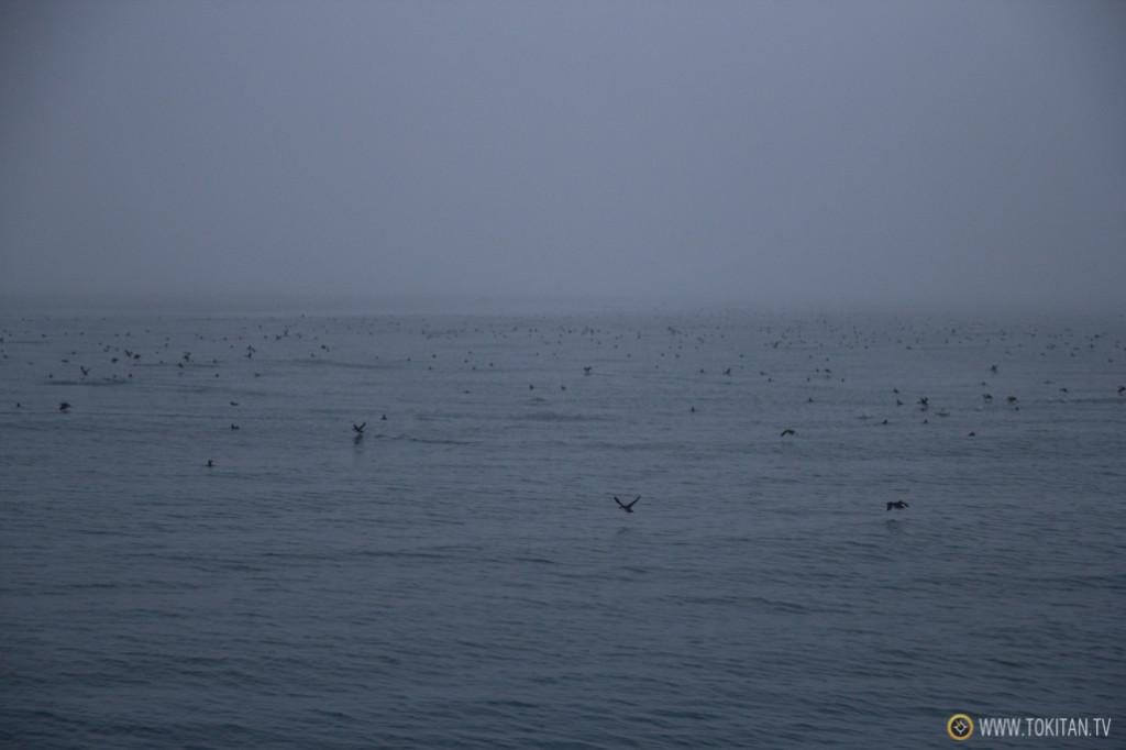 avistamiento_ballenas_islandia_husavik_north_sailing_puffins_frailecillos_cetaceos_niebla