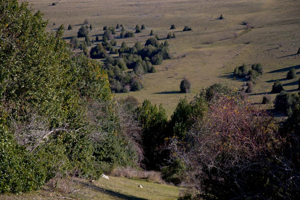 El Acebal de Garagüeta es uno de los mayores bosques de acebo de Europa.