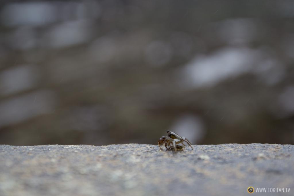 Probablemente este cangrejo sea capaz de llegar a la Isla sin despegar sus patas del suelo.
