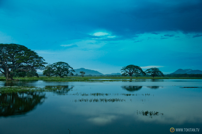 viajar_sri_lanka_que_ver_paisajes_lago_tissamaharama_arboles