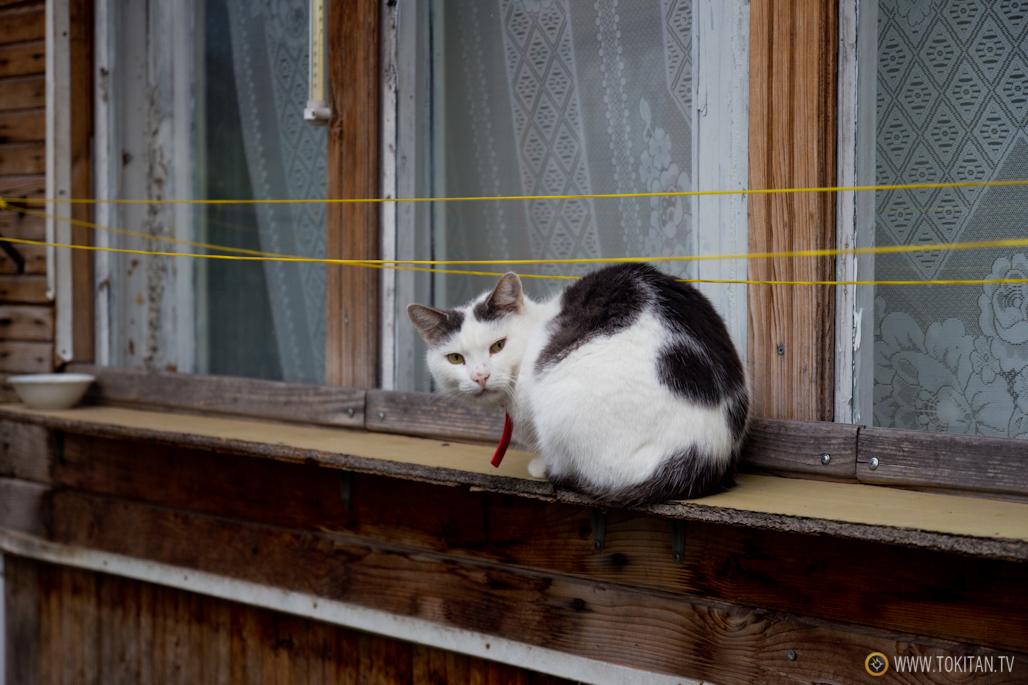 Los gatos custodian las casas de madera de Vilna.