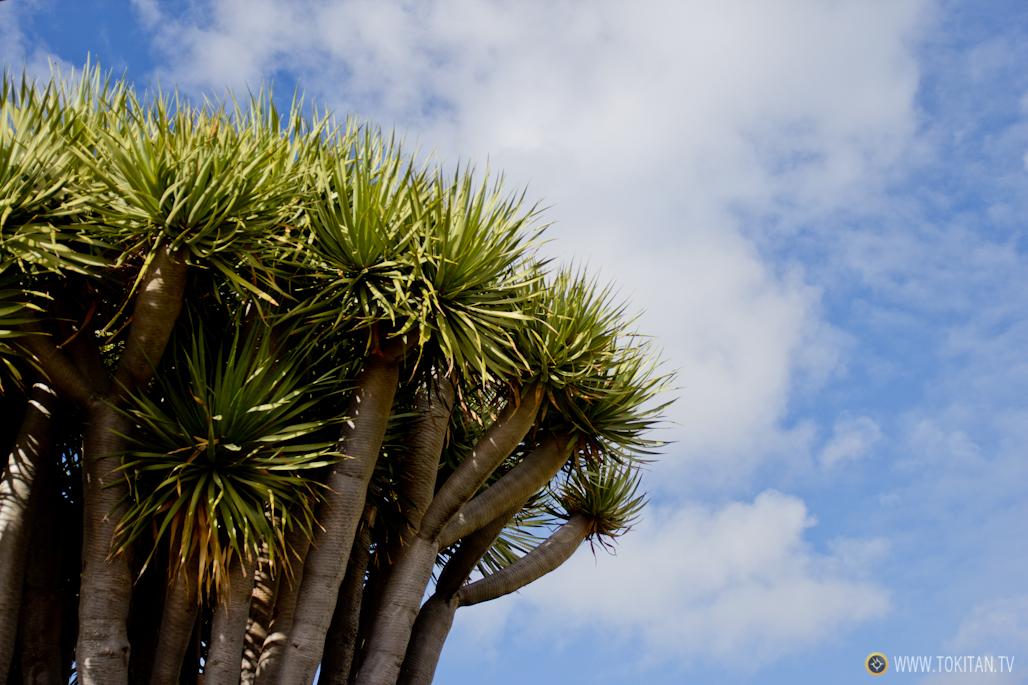 que-ver-la-palma-canarias-isla-bonita-rincones-paisajes-dragos-garafia