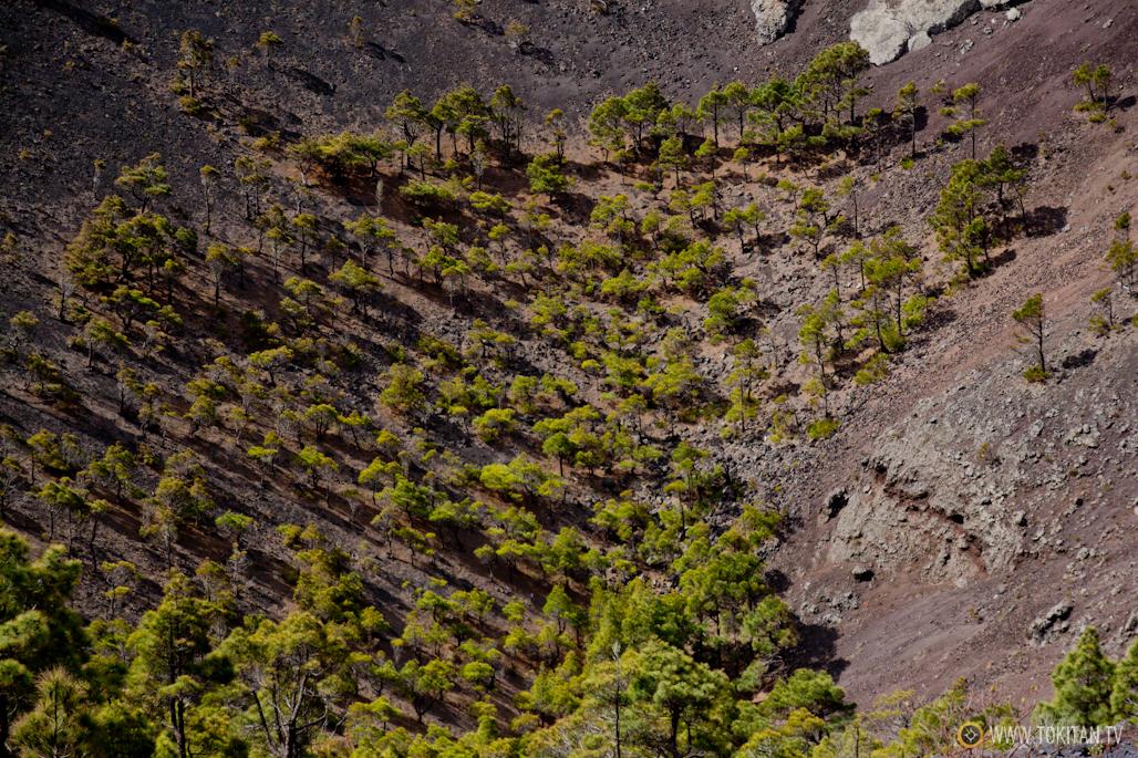 que-ver-la-palma-canarias-isla-bonita-rincones-paisajes-volcan-teneguia-arboles