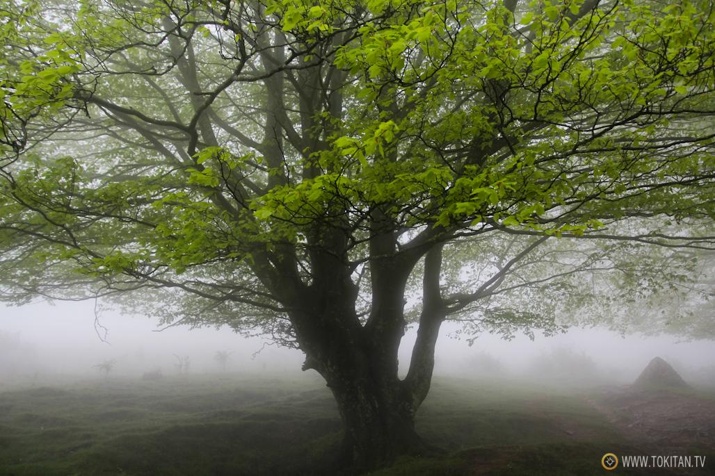 fenomenos-meteorologicos-montan%cc%83a-monte-lluvia-horizontal-bosque
