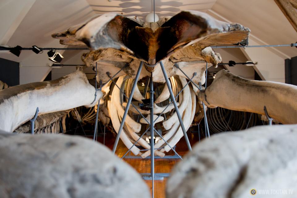 ruta-vikinga-noruega-barco-vikingo-historia-slottsfjells-museet-museo-tonsberg-vestfold-esqueleto-ballena